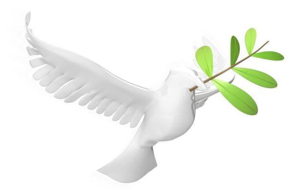 dove_with_olive_leaf_800_wht_8861