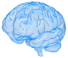 brain_semi_transparent_800_wht_13816